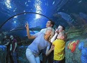 Составим массу Детских развлекательных программ: от  посещения крупнейшего Аквариума Европы в Генуе, до различных поездок в Аквапарки и парки с аттракционами для детей