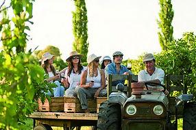 Занятия по энологии и Дегустации вин: Гави, Барбьера, Баролло, Долчетто проводятся в Замках и винных погребах Долин  находящихся недалеко от Генуи