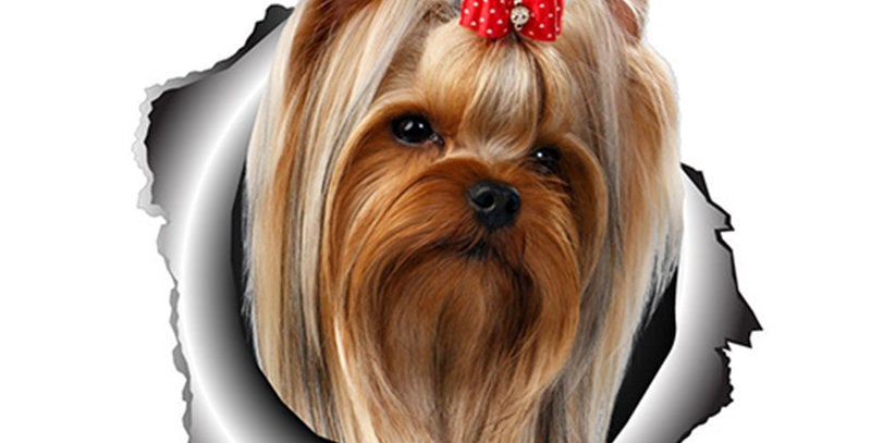 Yorkshire Terrier Vinyl Sticker