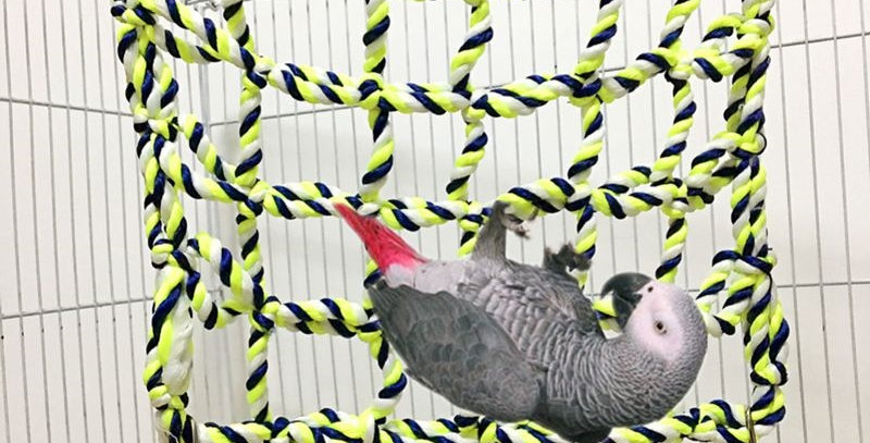 Bird Climb Net Nylon Rope Parrot Hanging Rope Stand Net Swing