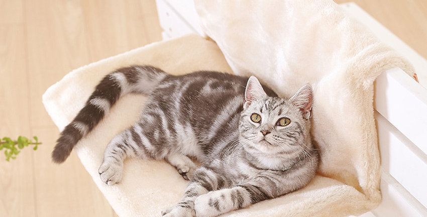 Cat Bed Removable Window Sill Cat Radiator Lounge Hammock