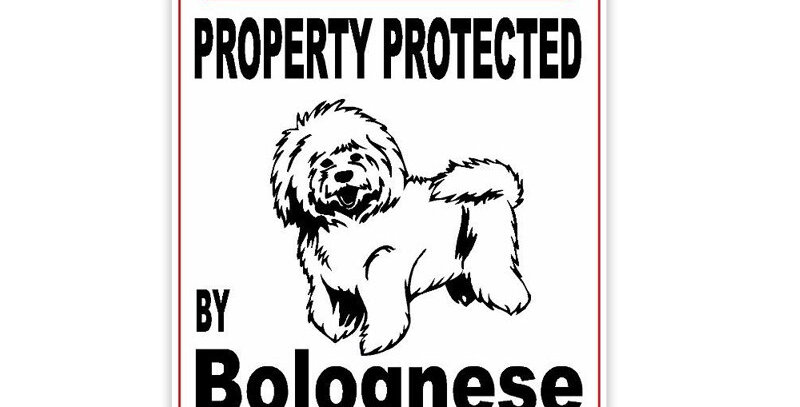 Property Protected by Bolognese Dog