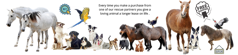 Rescue Market Cover Photo.png