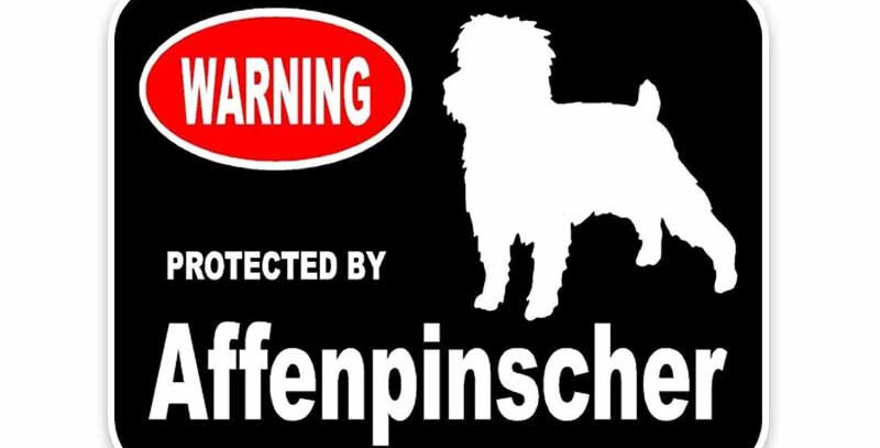 Protected by Affenpinscher Dog Car Window Bumper Stickers