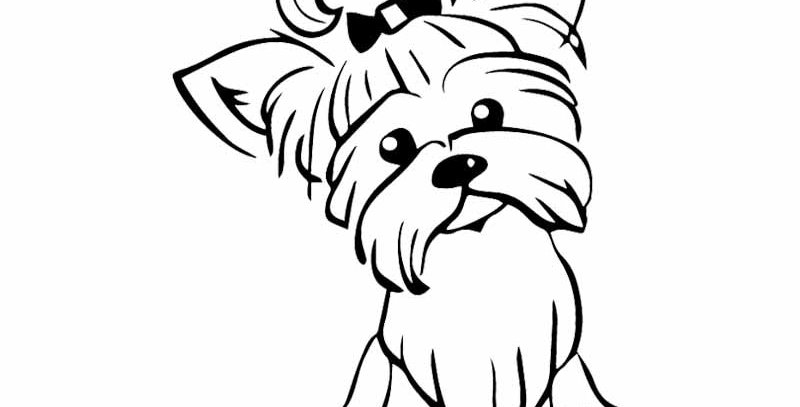 Yorkshire Terrier Pup Doggy