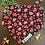 Thumbnail: Oh my Heart bandana priced from