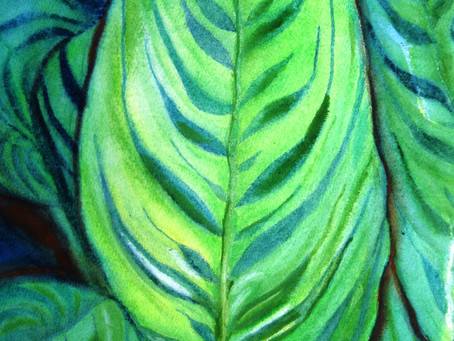 Exotic Brazilian Plant