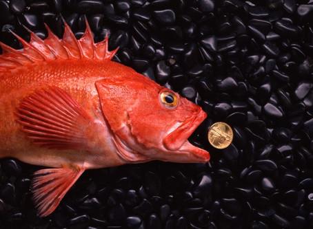 A Fishy Story