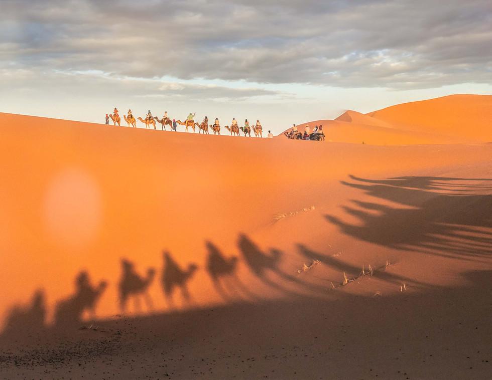 Camels Reflection