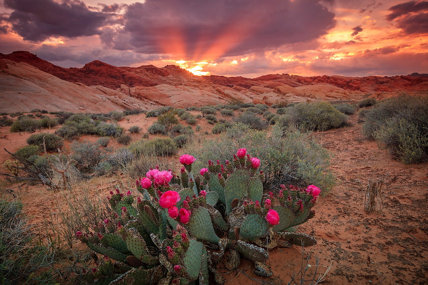Amazing spring sunset in the Nevada dese