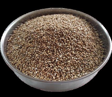 PEARL MILLET Rice ( Bajra / Bajri / Bajro / Kambam / Sajje / Sajjalu)