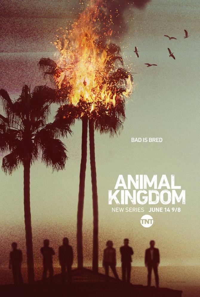 SAIKA 彩華 goes on TNT's TV series: Animal Kingdom