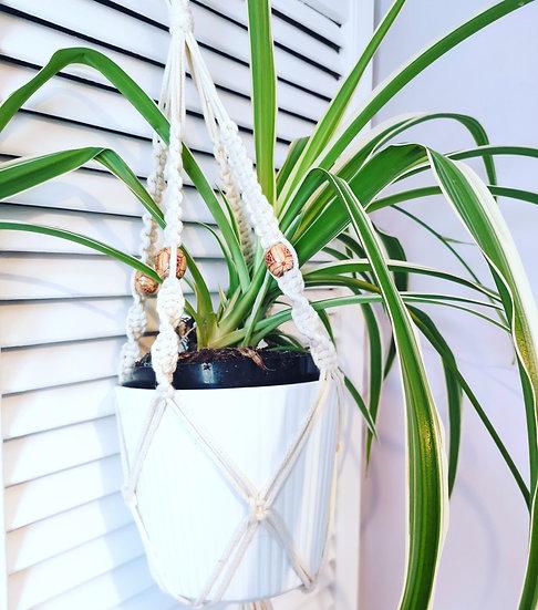 Macrame Pot Plant Hanger