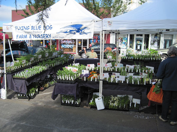 Flying Blue Dog Homestead an Nursery at the Arcata Farmers' Market