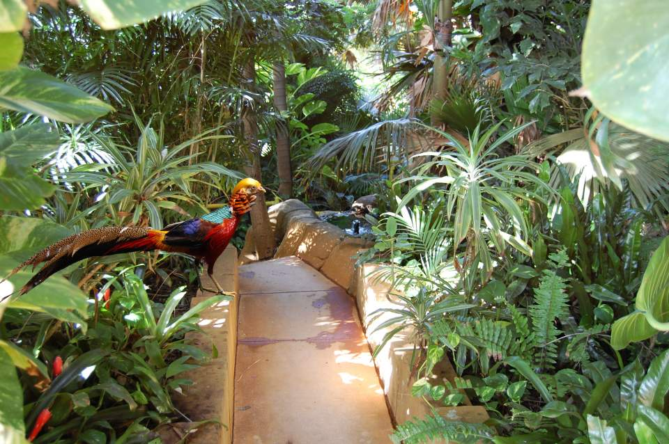 Rainforest walkway and pheasant