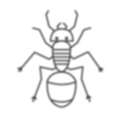 Ant_edited.png