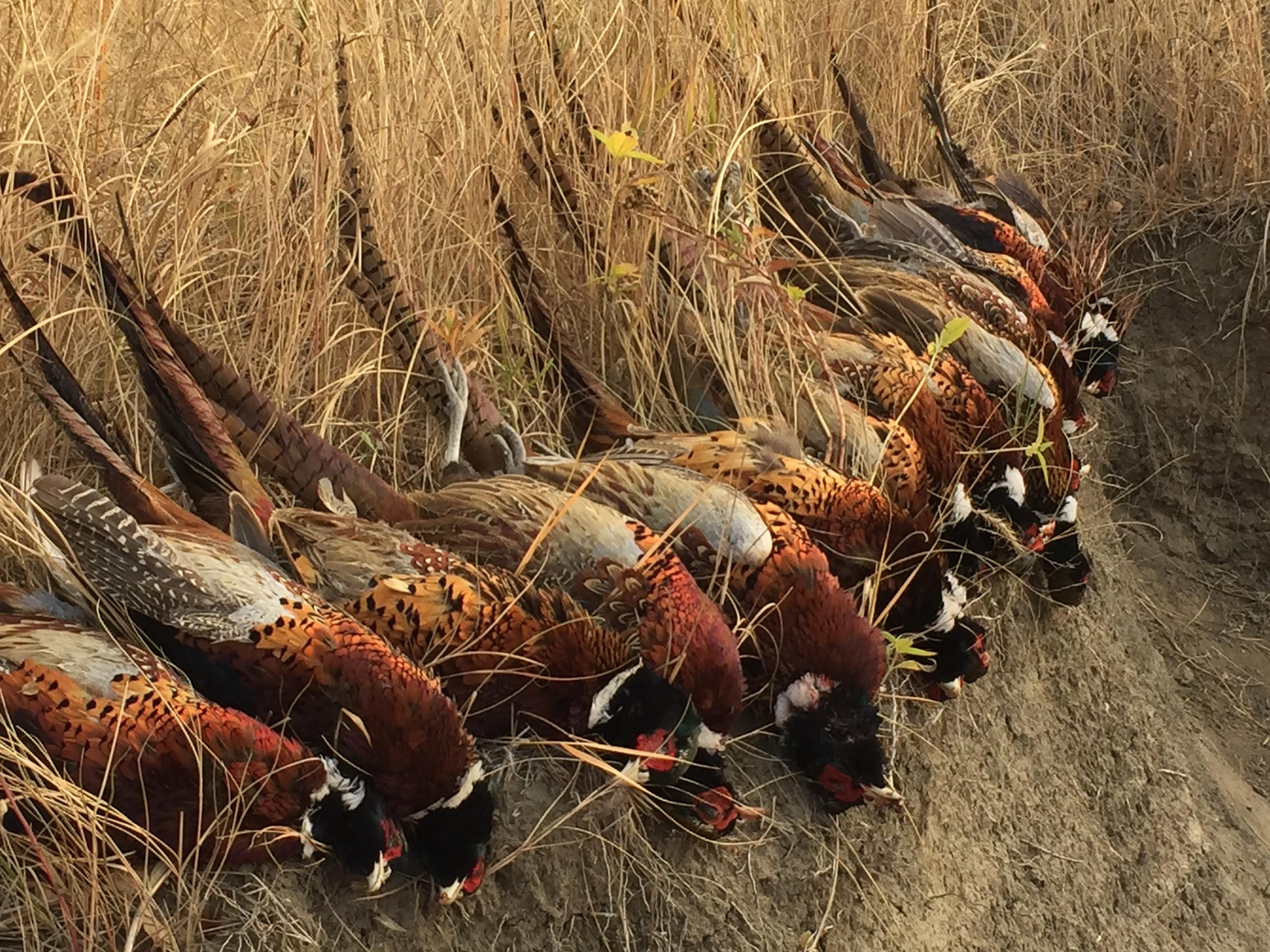 South Dakota Hunting