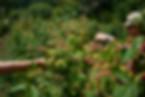 frambu-campo-07.jpg