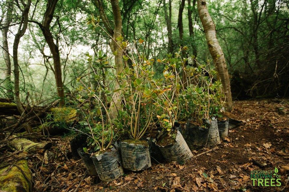 The main event! Rescued trees waiting to be planted (Photo credit: Shane Eades)