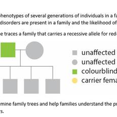 Family trees.jpeg