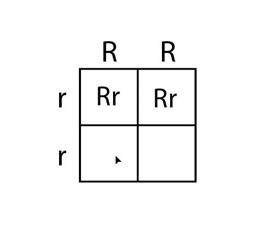Using Punnett squares.mp4