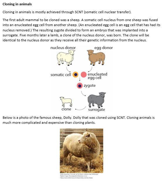 Cloning in animals.JPG