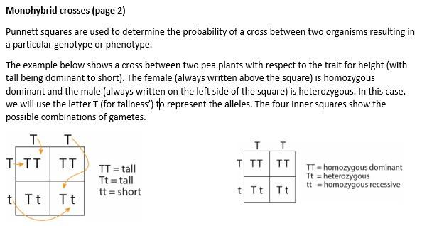 Monohybrid crosses (page 2).jpeg
