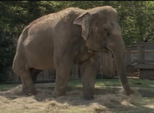 If You Love Elephants...