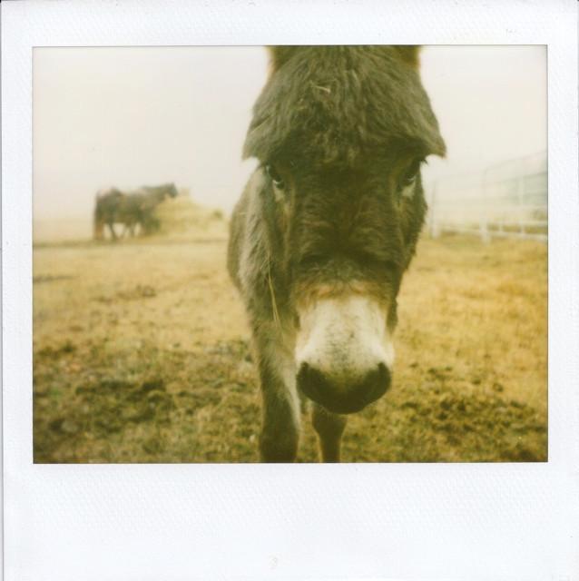 modern-donkey_6903789471_o.jpg