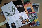 field studies class pic.jpg