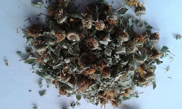 Grindelia leaf and flowers      1 ounce