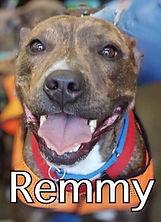 remmy.jpg