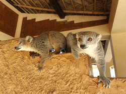 Hôtel-Madagascar-Lakana