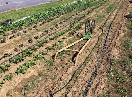 Seedling Season