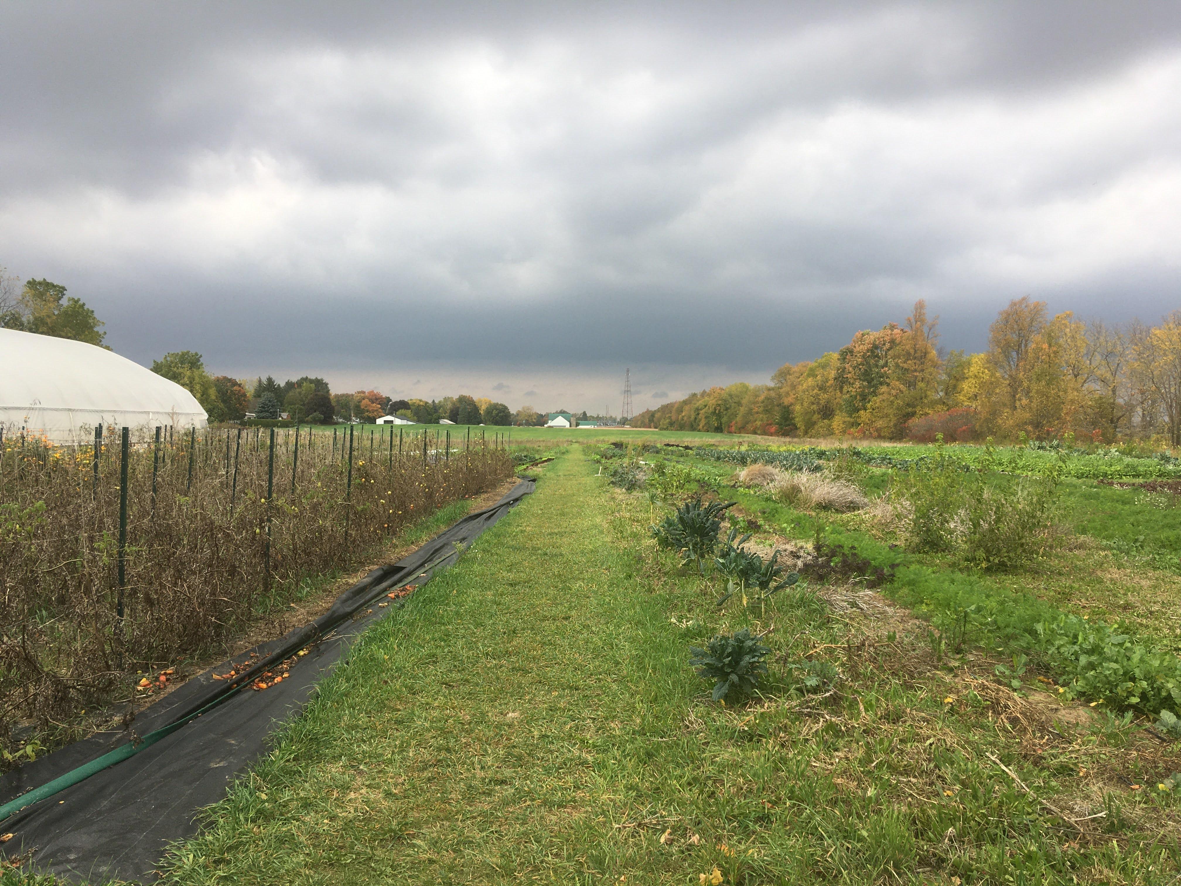 Field October