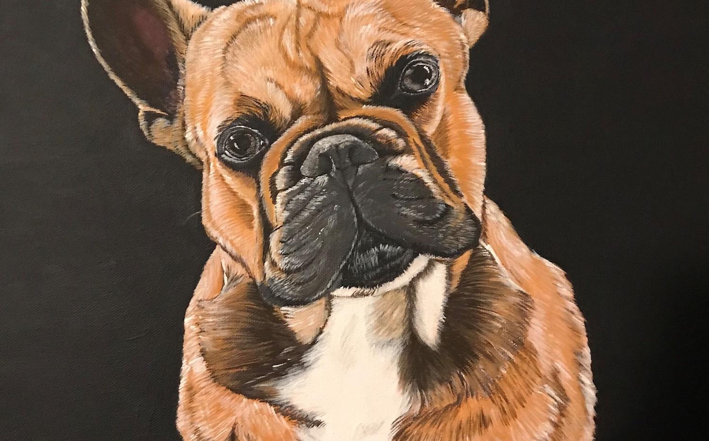 Portrait französische Bulldogge.jpg