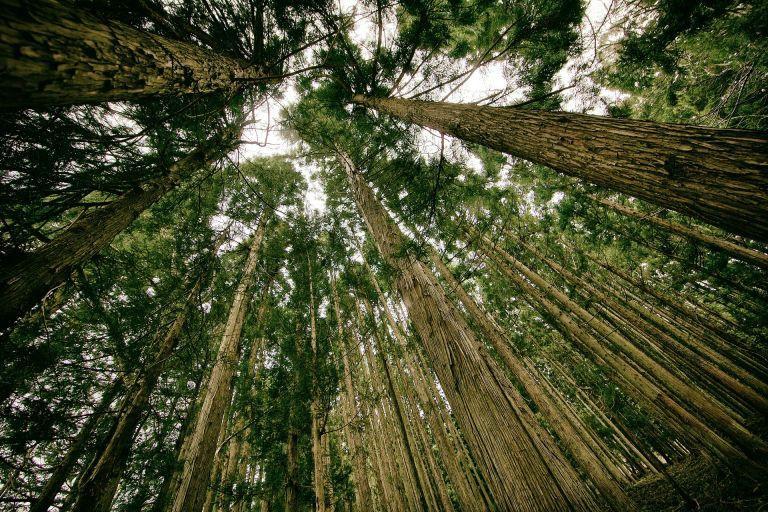 Высадка триллиона деревьев поможет сбалансировать выбросы углекислого газа в атмосферу