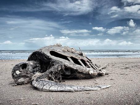 Шестое массовое вымирание животных и растений