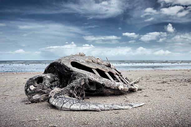 Шестое массовое вымирание растений и животных