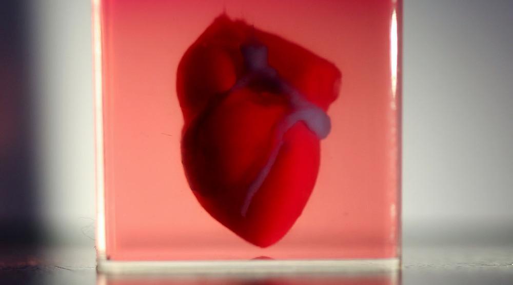 3D напечатанное сердце (модель)