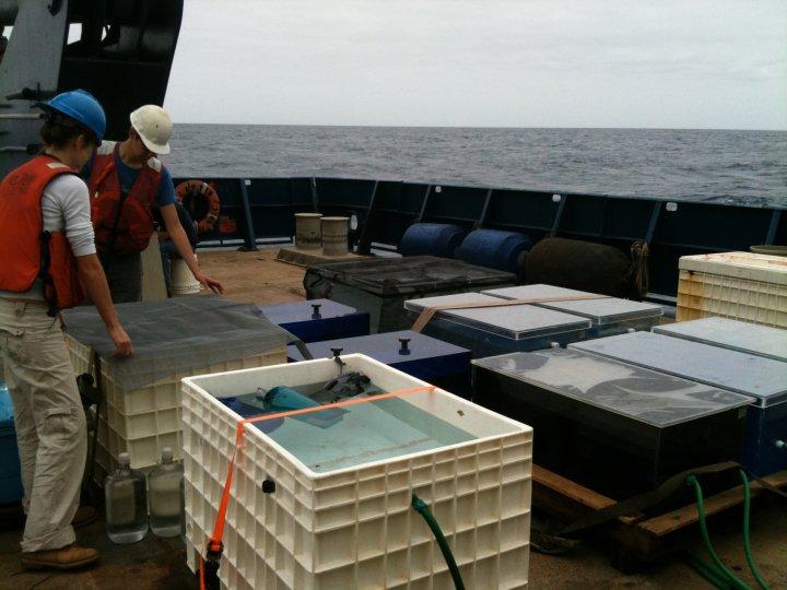 Deckboard Incubations, ETSP