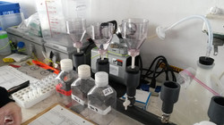 Filtering for Chl a