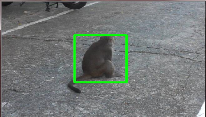 L停猴子照片實測.png