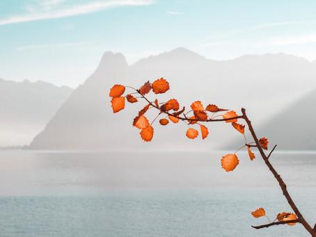 Fall: The Season of Letting Go