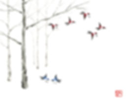 MCCC-Forest_CraigWhitten_MCC.jpg