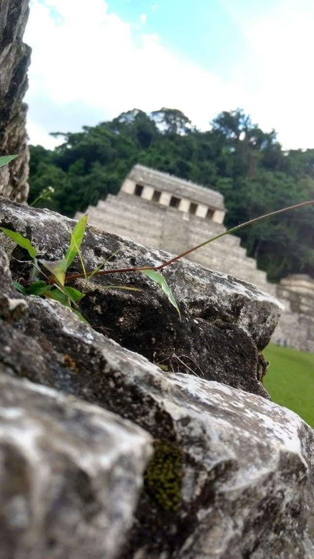 Descubre Palenque, Agua Azul, Misol Ha