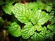 aroma-aromatic-close-up-214165.jpg