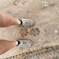 Yoga Safari Trails