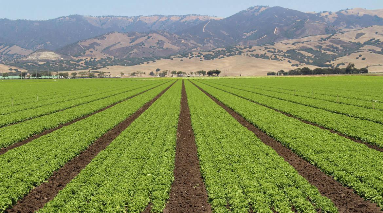 lettuce-1-1170x650.jpg