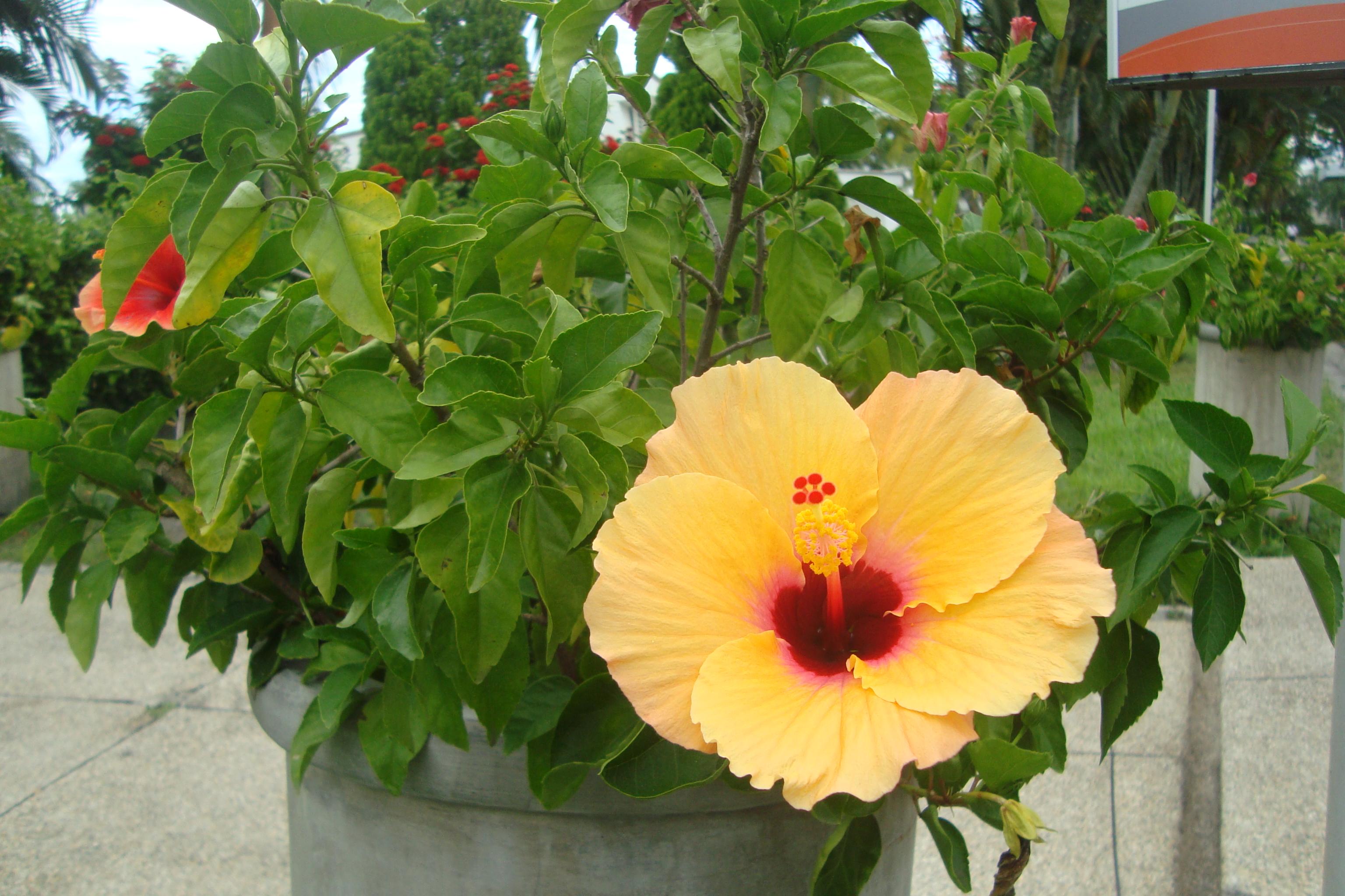Plantas florales